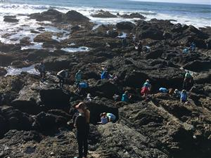 Pigeon Point Science Camp